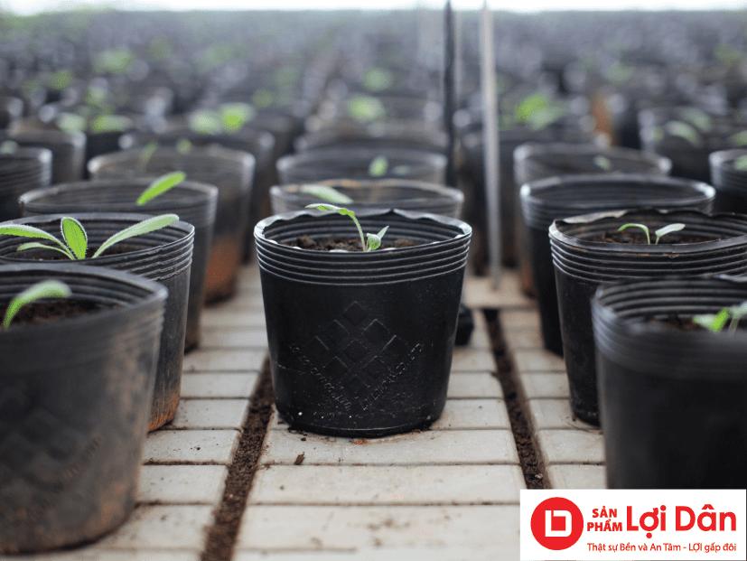 Chậu nhựa ươm cây có kích thước nhỏ, phù hợp với nhiều loại cây khác nhau.