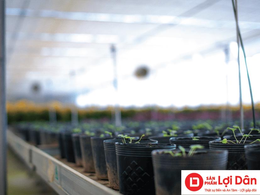 Chậu nhựa đen ươm cây con, được làm từ nhựa HDPE nguyên sinh siêu bền.