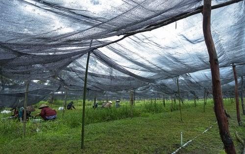 Lưới che nắng Trung Quốc che vườn rau