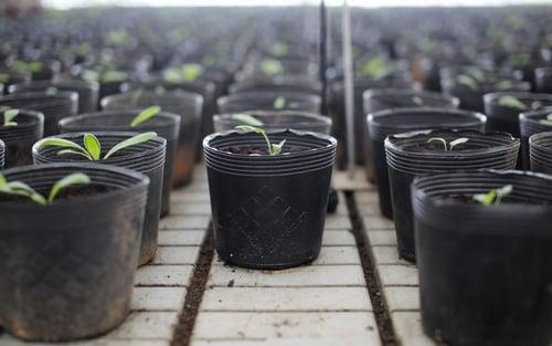Chậu nhựa trồng cây Lợi Dân