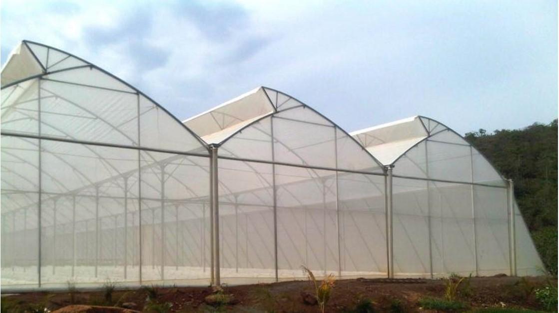 Nhà lưới trồng rau sạch công nghệ cao