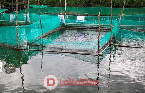 lưới ly nuôi tôm,cá