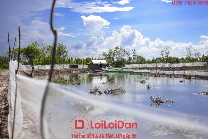 loại lưới khổ 1m thường dùng rào ao cá, ếch, ngành thủy sản