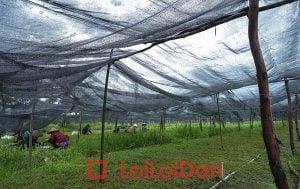 Lưới Đen che nắng có thời gian sử dụng thường 3-5 năm