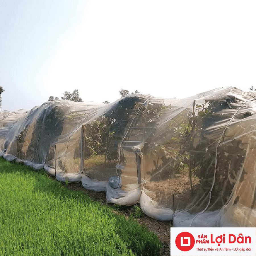 Lưới trùm vườn mận là loại lưới chắn côn trùng được dùng nhiều trong vườn mận.