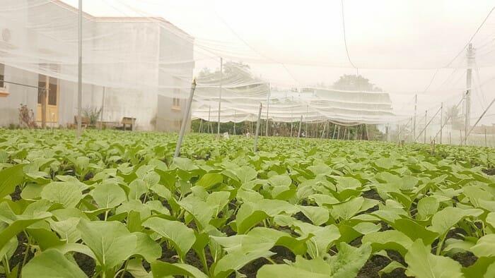 Mô hình trồng rau sạch trong nhà lưới giá rẻ - Lợi Dân