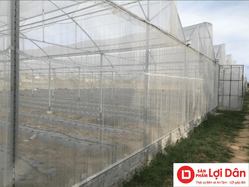 Nhà lưới công nghệ cao trồng rau sạch.