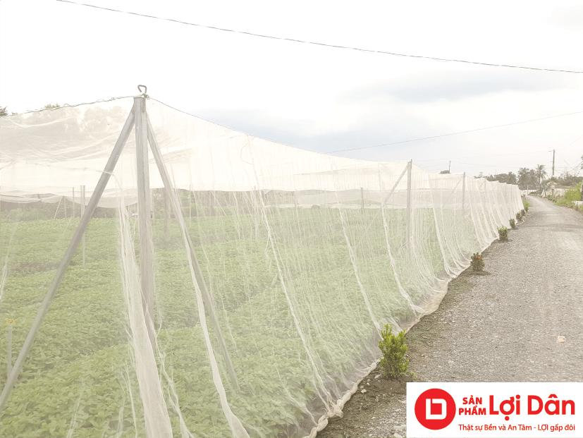 Mô hình nhà lưới trồng rau sạch giá rẻ.