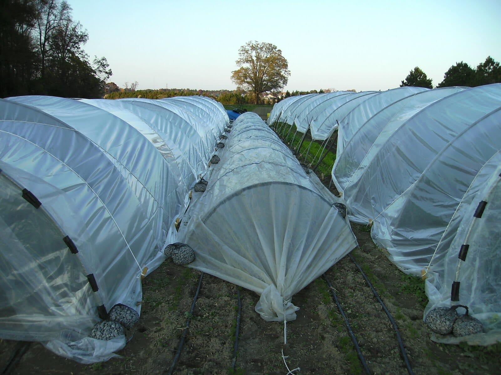 Nhà lưới trồng rau dạng đường hầm