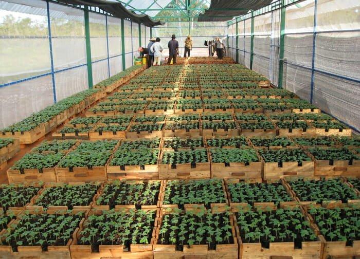 Vườn ươm cây giống trồng rau sạch - Lợi Dân