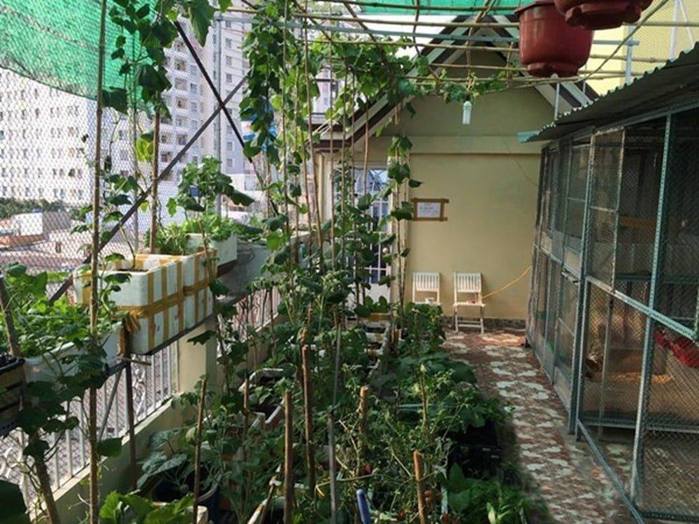 lưới lan che mát vườn rau - Lợi dân