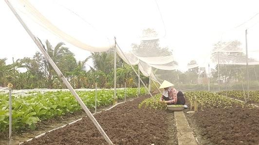 Lưới chắn côn trùng được sử dụng làm nhà lưới - Lợi Dân