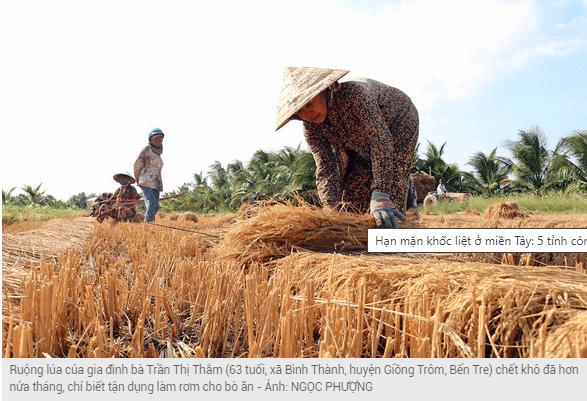 bà con nông dân đang khó khăn vì khô hạn