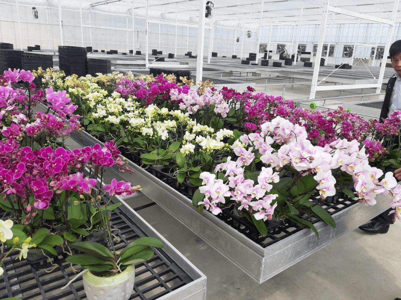 Tấm lót sàn nhựa dùng trong nhà trồng lan giá rẻ chất lượng