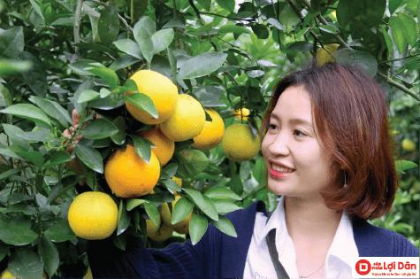 sử dụng lưới chắn côn trùng cho cam là phương pháp hiệu quả nhất để bảo vệ cam khỏi bị côn trùng tấn công.