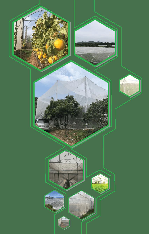 Một số mô hình tiêu biểu sử dụng lưới mùng chắn côn trùng của Lợi Lợi Dân.