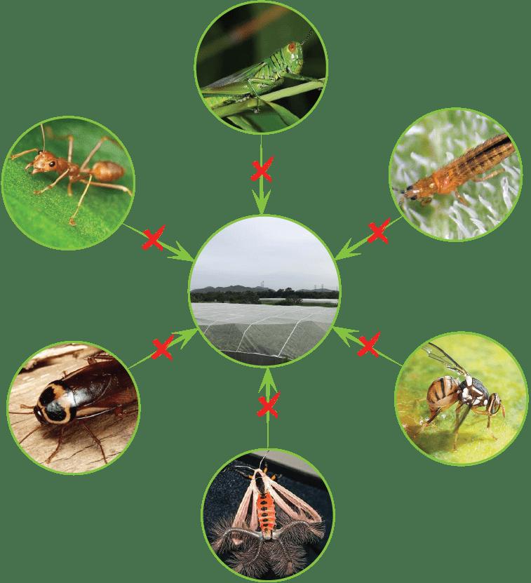 Lưới nhựa chống côn trùng có thể chống hầu hết các loại côn trùng