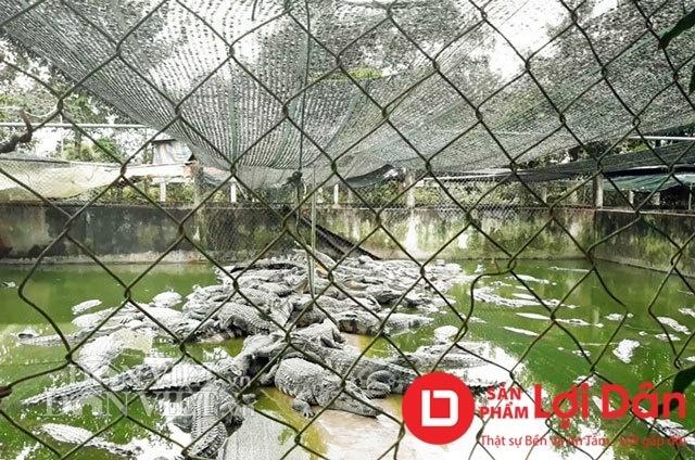 Xây dựng chuồng cao và bao lưới để đảm bảo an toàn trong việc nuôi cá sấu