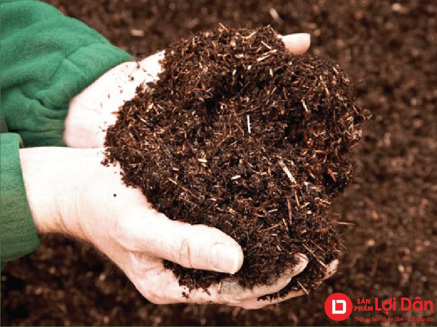 kỹ thuật trồng hoa cúc - chọn đất trồng cây.