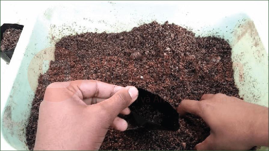 Đất trồng hoa Sứ phải được làm tơi xốp và dễ thoát nước.