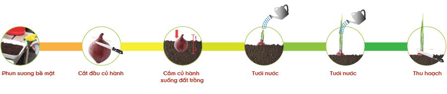 Các bước trồng hành trong chậu nhựa.