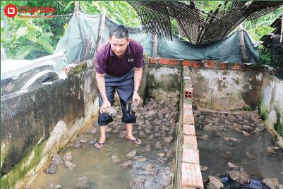 Thay nước thuyền xuyên khi nuôi ếch trong hồ xi măng.