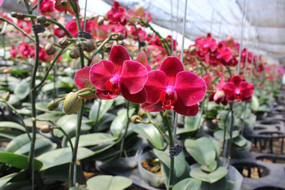 Hoa lan hồ điệp với vẻ đẹp tinh tế