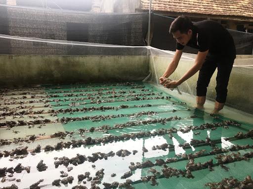 Thường xuyên kiểm tra ếch nuôi để khắc phục vấn đề nếu có.