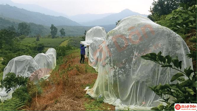 Xử lý đất trồng giúp cây không bị nhiễm bệnh.