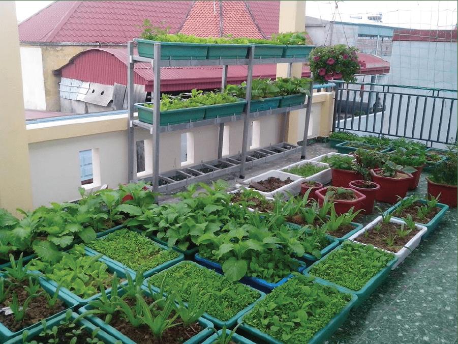 Hình ảnh thực tế sử dụng khay nhựa trồng rau trên sân thượng.