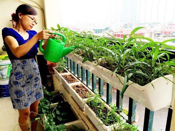 Chăm sóc yêu thương vườn rau nhà mình.