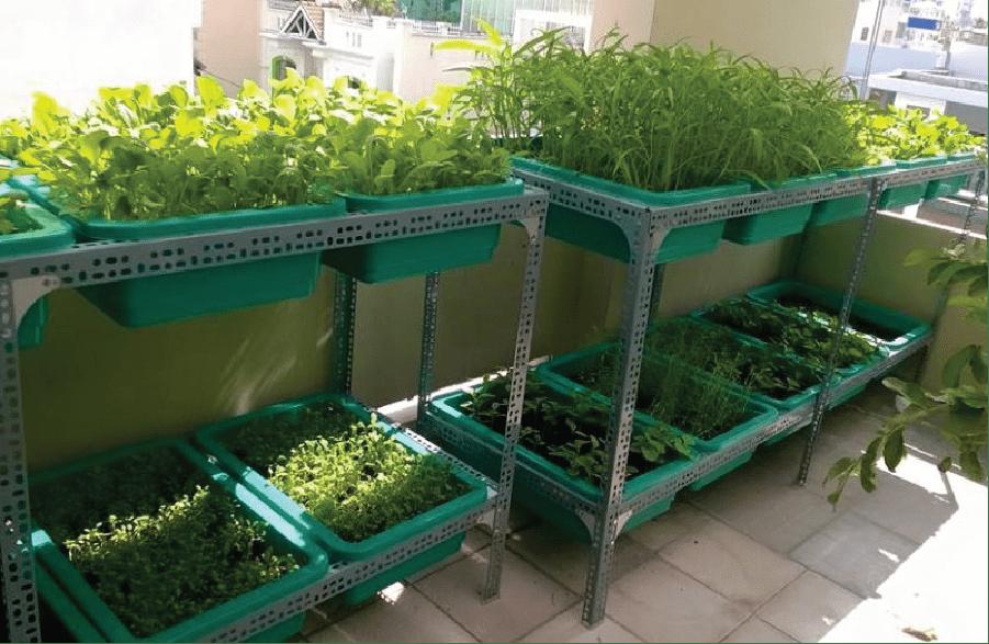 Sử dụng khay nhựa để trồng rau tại nhà.