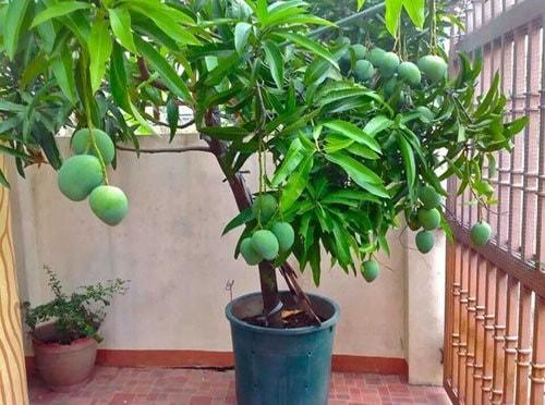 Bạn cũng có thể trồng cây ăn tría tại nhà để thay đổi không gian sống.