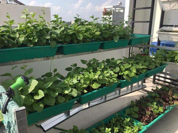 Hình ảnh trồng rau tại nhà trong mùa dịch.