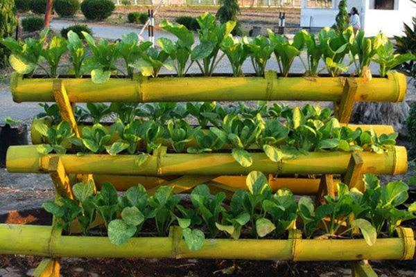 Làm giàn trồng rau bằng ống tre.