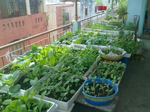 Đất sạch trồng rau rất quan trọng.