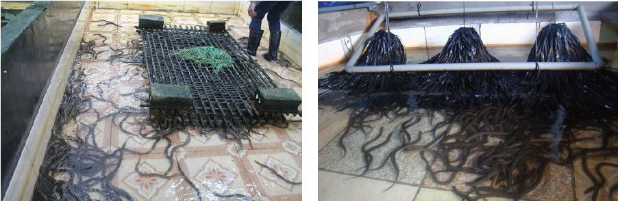 Giá thể cho lươn trú ẩn.