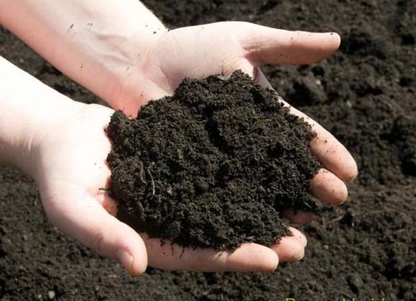 Đất trồng rau sạch tại nhà.