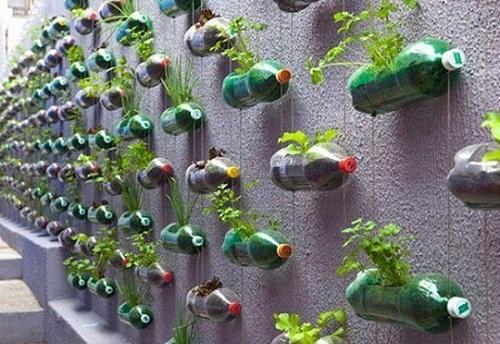 Thành phẩm giàn trồng rau từ chai nhựa.