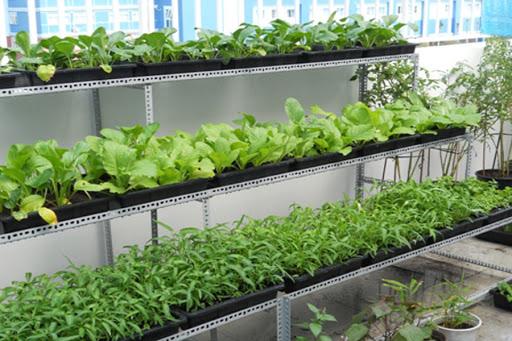 Cách làm giàn trồng rau trên sân thượng.