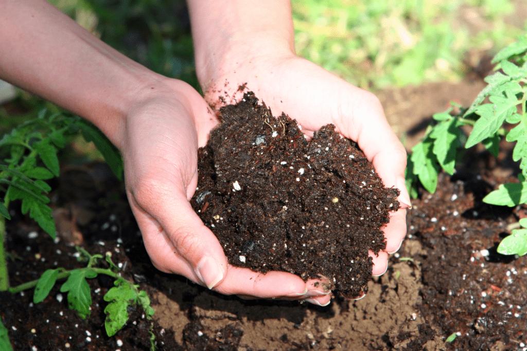 Đất trồng ớt phải có độ PH từ 6 -7