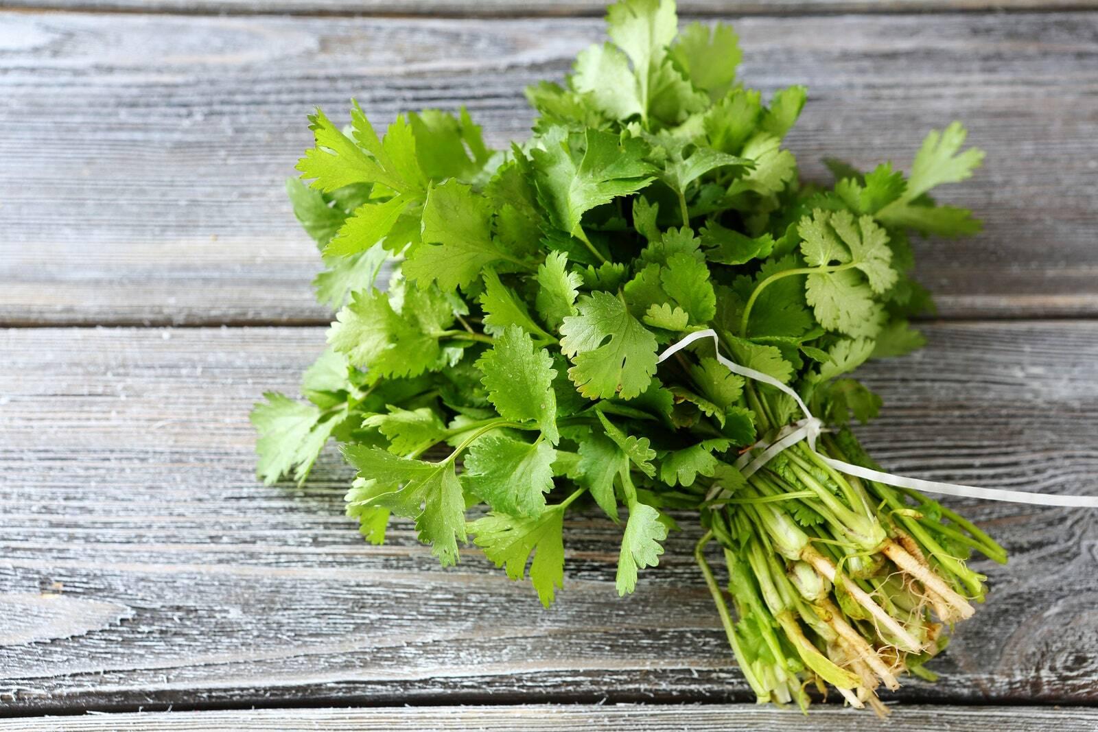 Ngò rí - Loại rau thơm khá phổ biến tại nước ta