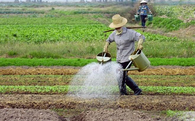 Ảnh hưởng của Dịch covid đến nông nghiệp