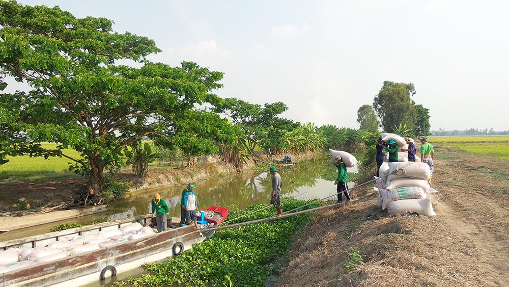 Sản xuất lúa gạo ở các tỉnh Đồng bằng sông Cửu Long