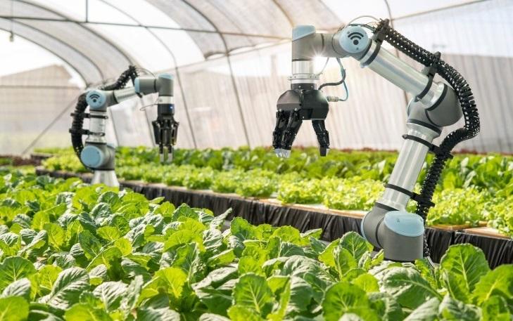 Sử dụng siêu công nghệ trồng rau sạch.